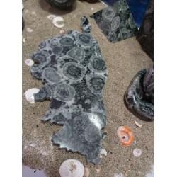 Corse en diorite orbiculaire