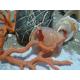 Pendentif main corail rouge et or 18 carats.